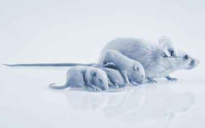 """Exclusive study """"Use of NGS to replace animal tests for the viral safety of biologics"""""""